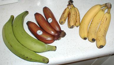 Bananavarieties.jpg