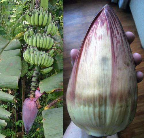 bananaheart__2.JPG