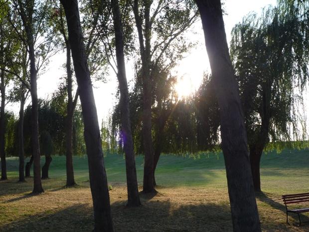 fák.JPG