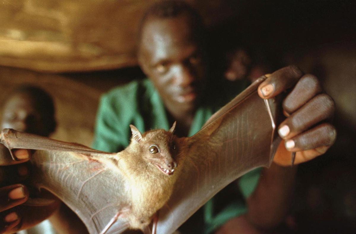 ebola-bat.jpg
