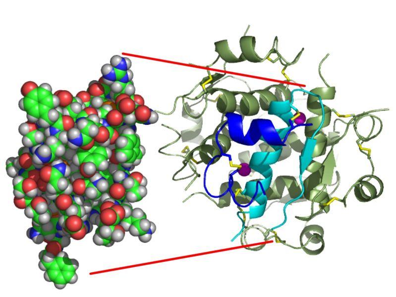 inzulin_monomer.jpg