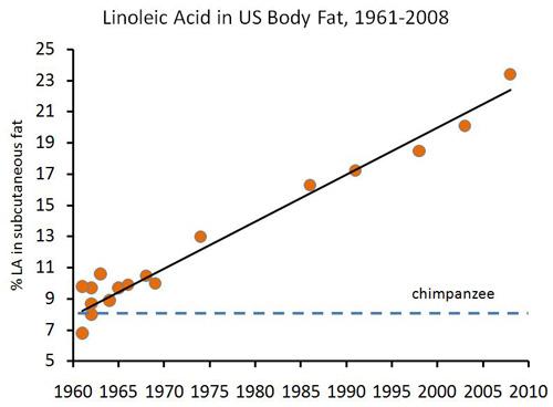 linoleic-acid.jpg