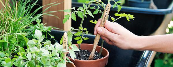 palantazas-bambusz-fogkefevel.jpg