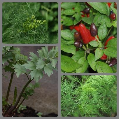 zöldségeim_kép.jpg