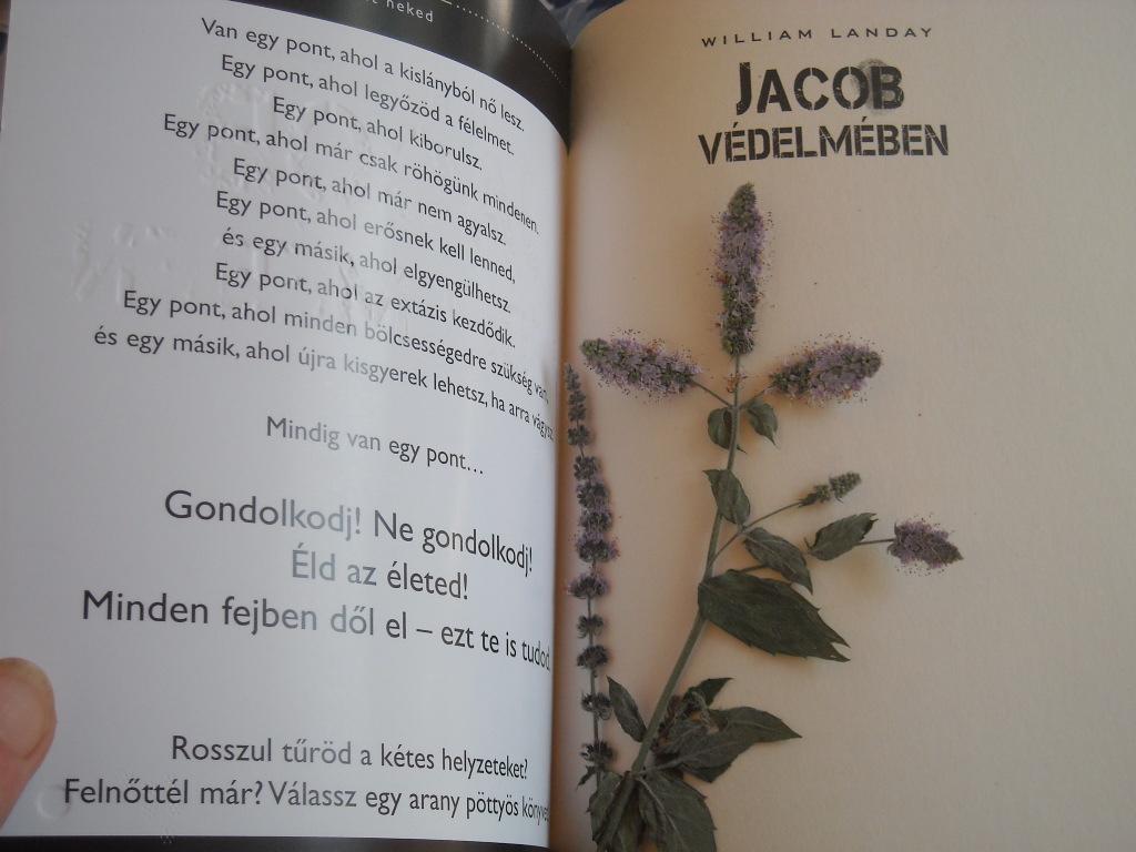 Könyv és krémes 015.jpg