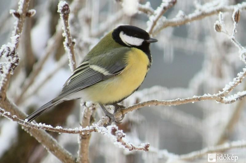 A madarak téli segítése