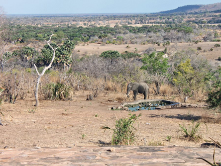 it-looks-out-on-a-man-made-watering-hole-thats-popular-with-the-local-game-this-elephant-stopped-by-for-a-drink-while-i-was-eating-lunch-one-day-and-i-took-this-picture-from-my-seat.jpg