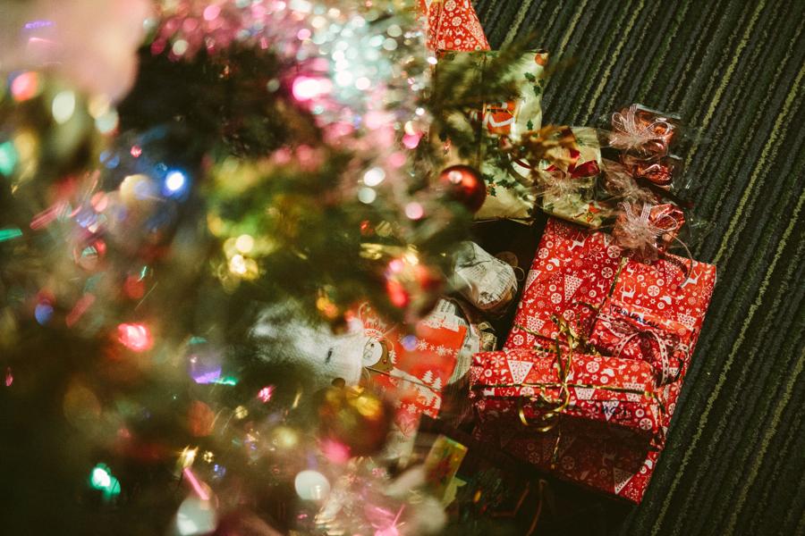Karácsony 2013 - macskák a fa alatt