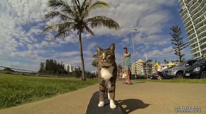Didga a gördeszkás macska
