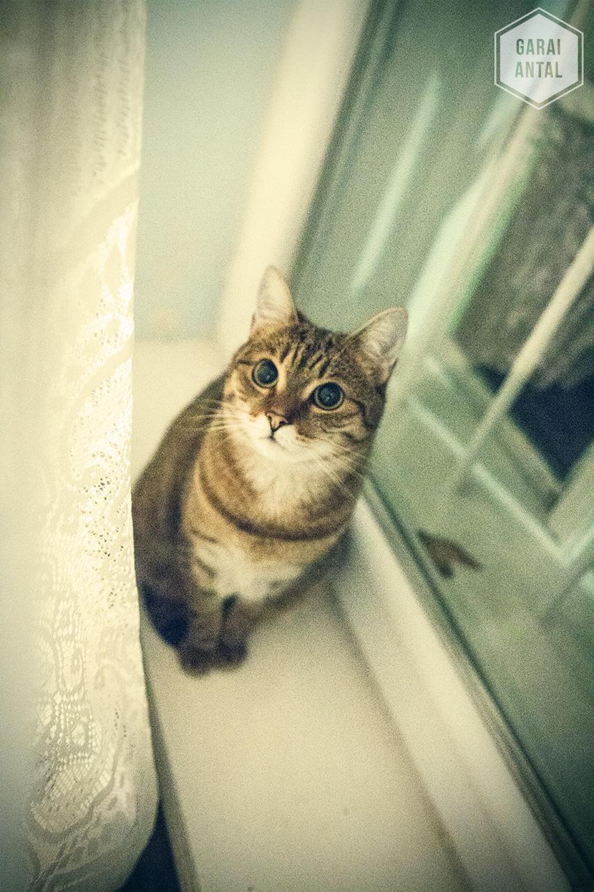 Lulu az ablakban