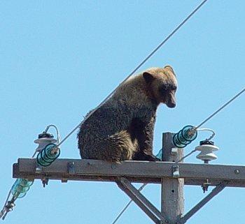 AAA_index_bear_20140212.jpg