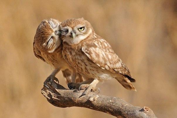 természetesen a szerelem, mint az állatok flört