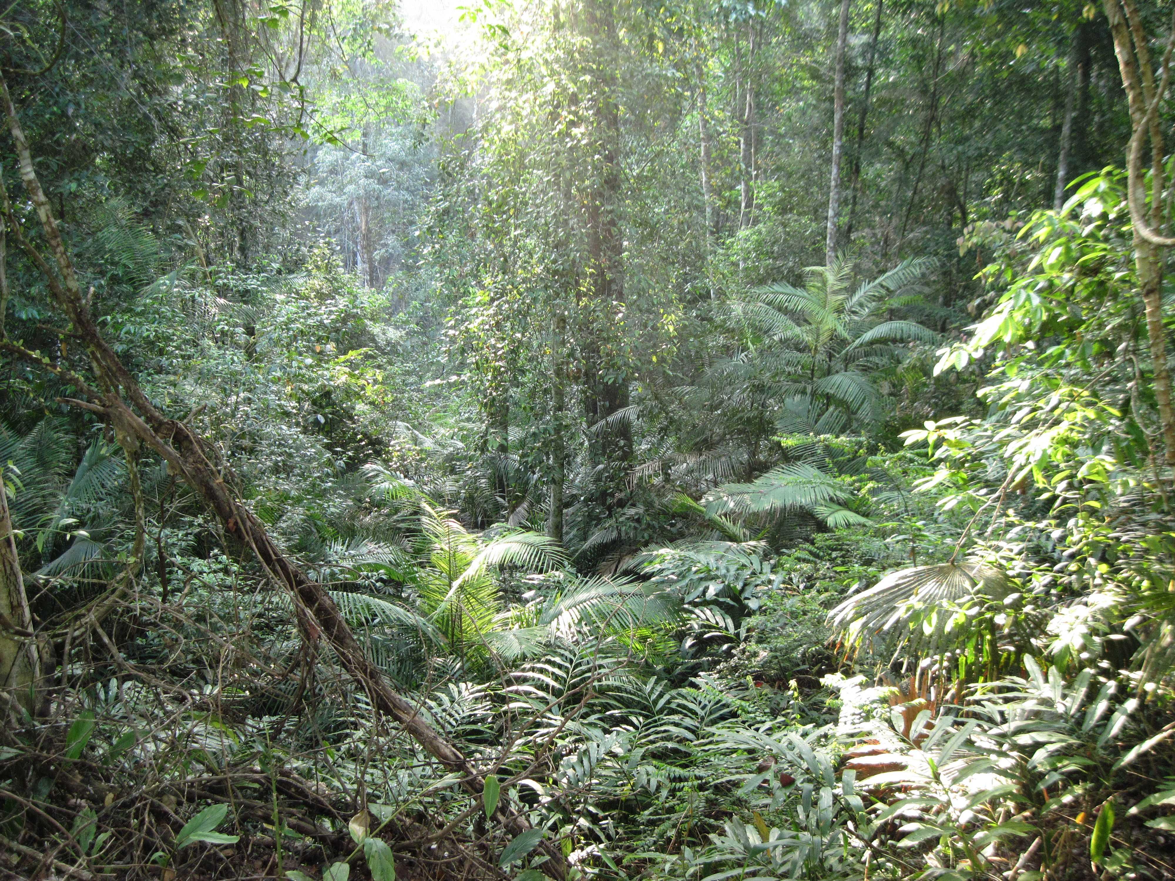 09 - dzsungel.jpg