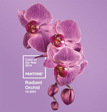 pantone-color-year-2014-radian-orchid.jpg