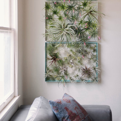 Plant Wall Art air plant wall hanging : diy