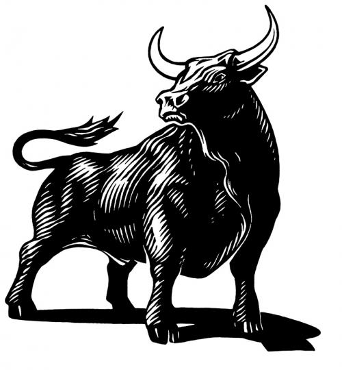fekete-bika.jpg