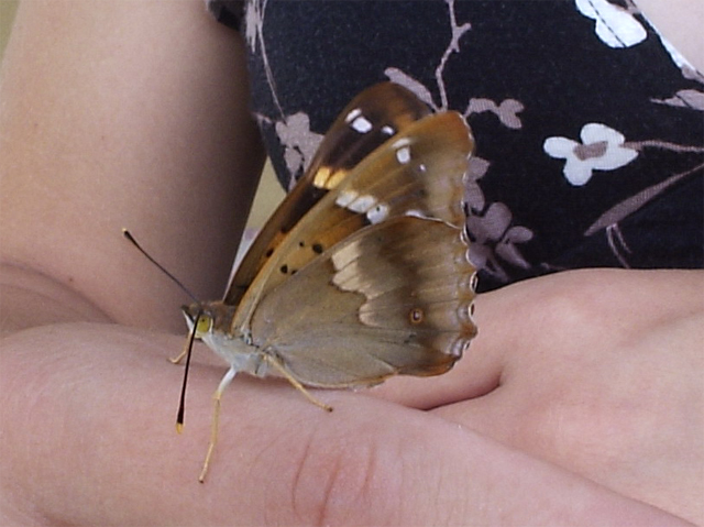 pillango2.jpg