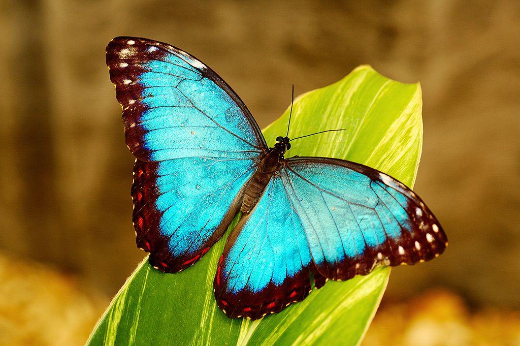 bluemorphoz.jpg