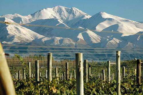 Menoza-Andes-Wine.jpg