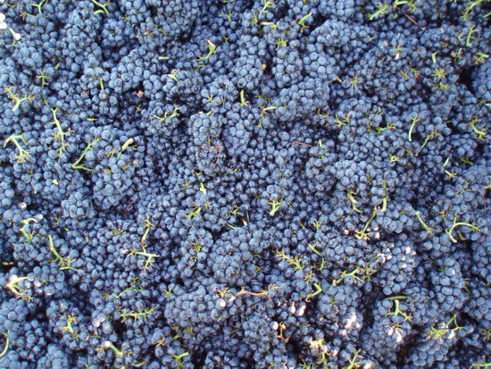 Pinot-Noir-Grapes.jpg