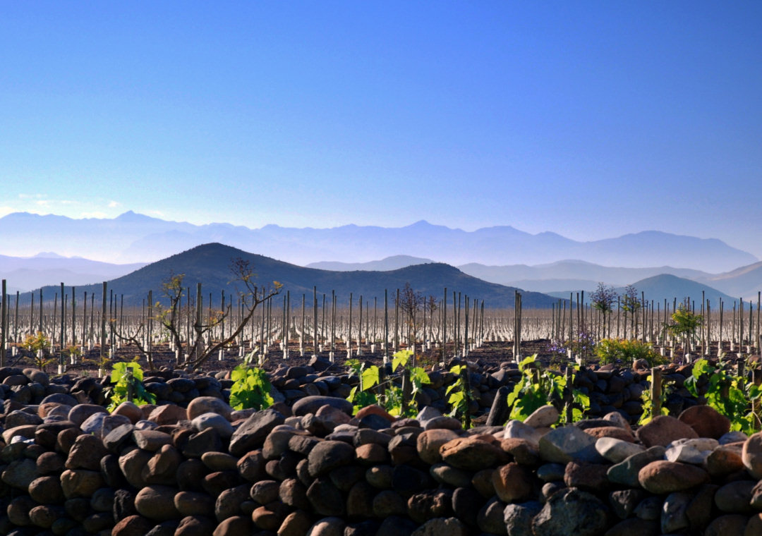 tabali-vineyard-big.jpg