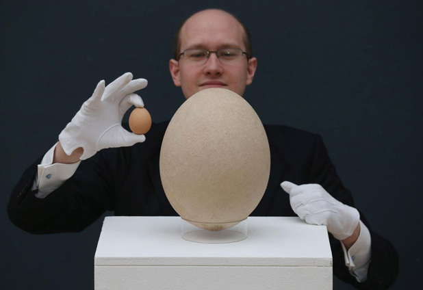 Elfogyott a Dior sütemény és aukción az elefántmadár tojása - BURZSUJ Á LA CARTE