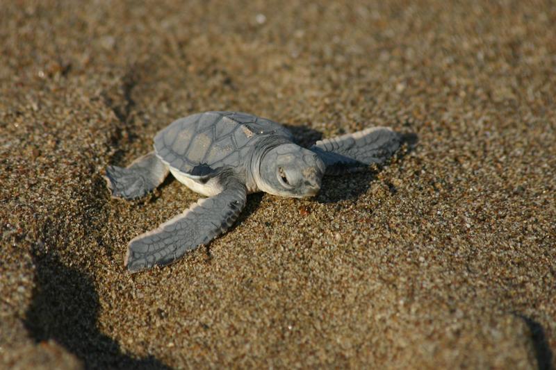 20040825-mini_turtle.jpg
