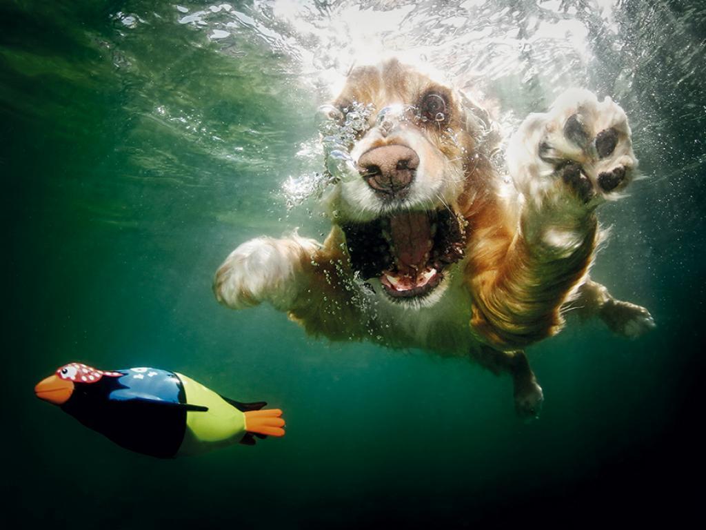 pancsoló kutyusok 4.jpg