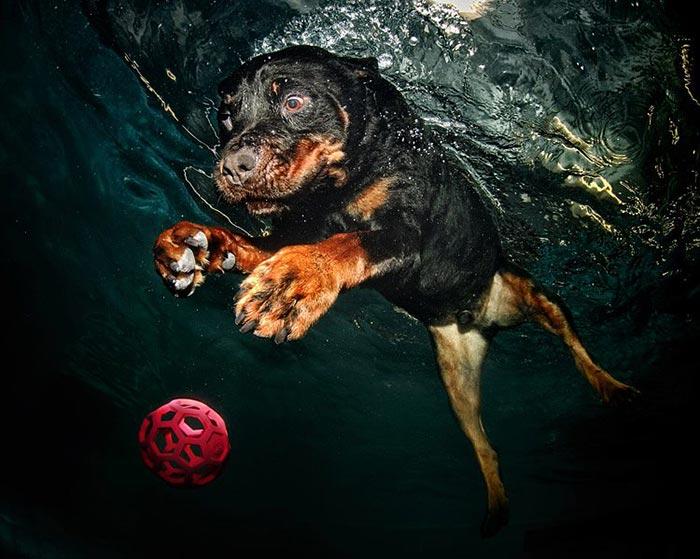 pancsoló kutyusok 6.jpg