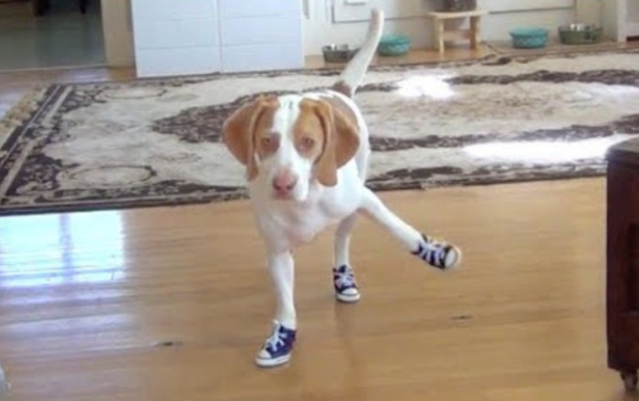 The crossover you've been waiting for is finally here: Dog lovers and sneakerheads now have a reason unite their two passions thanks to the Dogs in Shoes