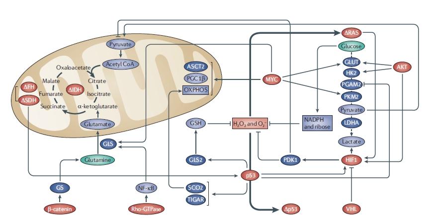 Ketogén diétával a rák ellen? - Critical Biomass