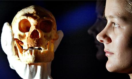 Flores-hobbit-skull-model-011.jpg