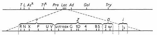 lac_region_diagramm.png