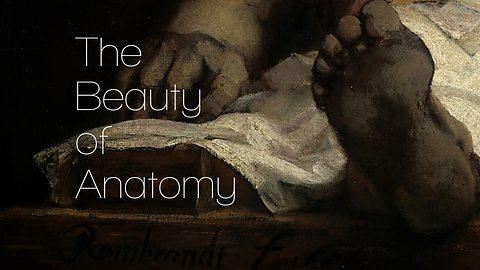 BBC-anatomy.jpg
