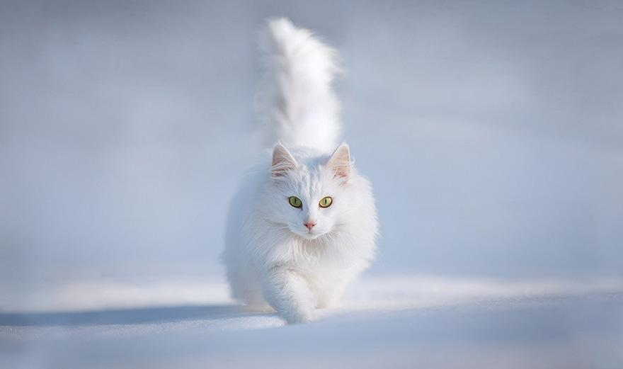 animals-in-winter-2.jpg
