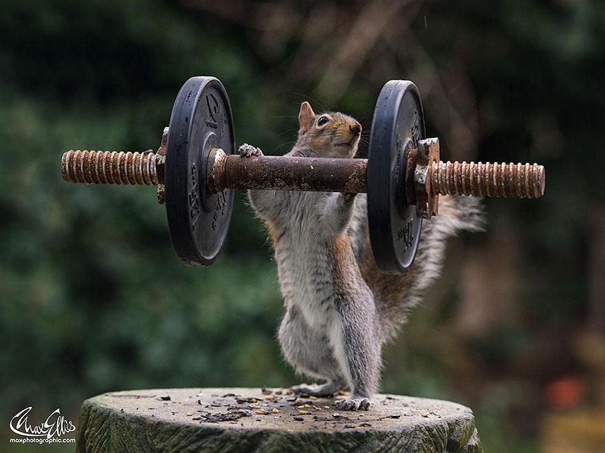 wildlife-photography-squirrels-max-ellis-12__880.jpg