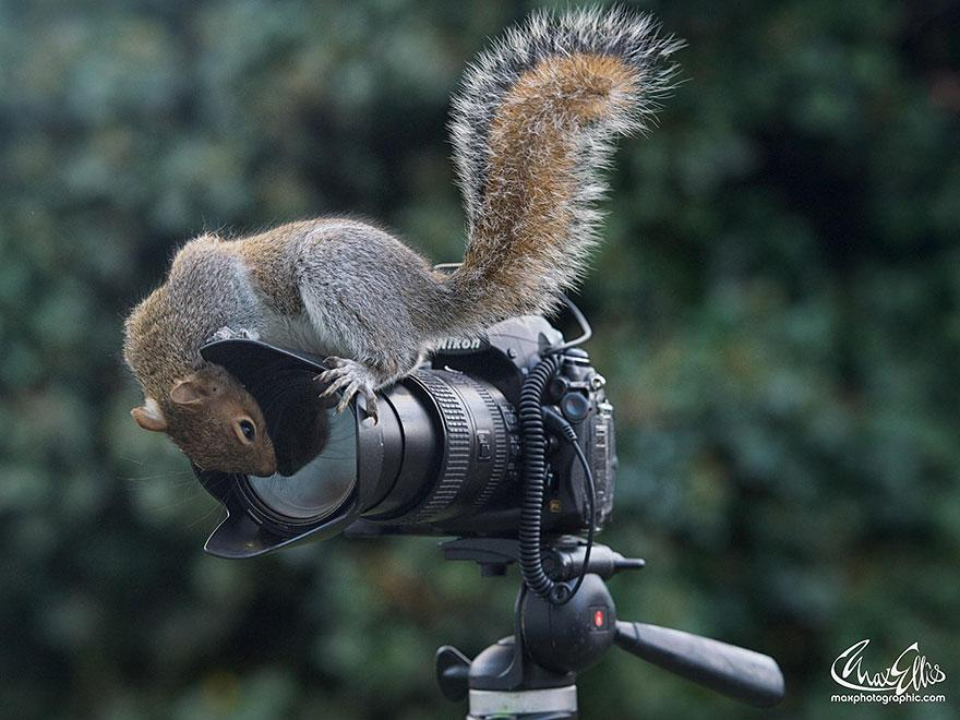 wildlife-photography-squirrels-max-ellis-15__880.jpg