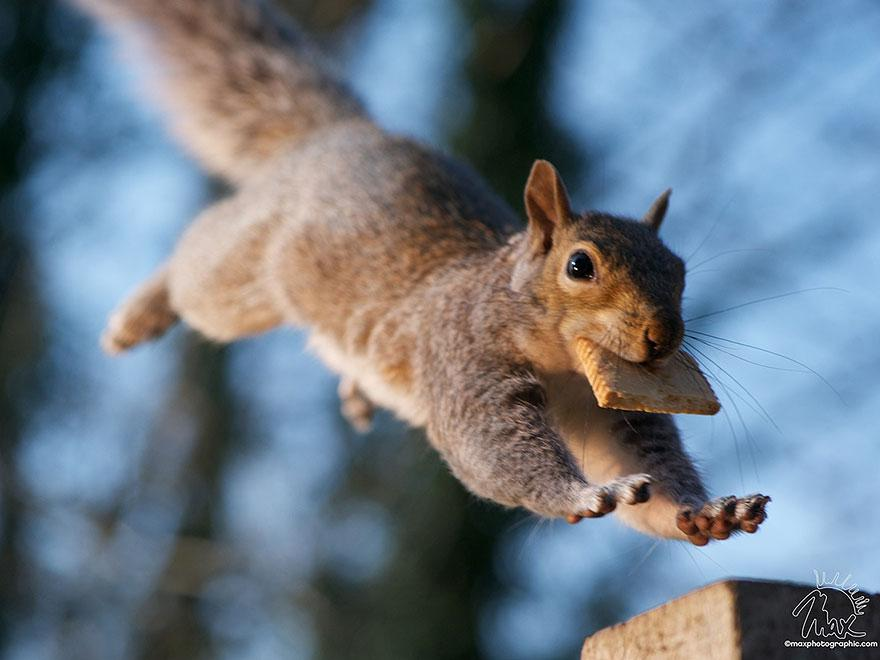 wildlife-photography-squirrels-max-ellis-25__880.jpg