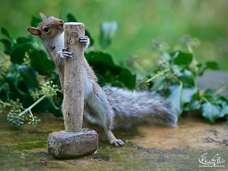 wildlife-photography-squirrels-max-ellis-7__880.jpg