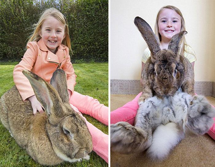 worlds-largest-rabbit-darius-jeff-1.jpg