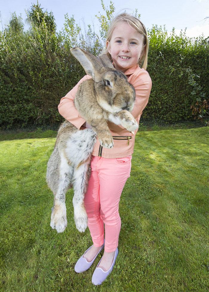 worlds-largest-rabbit-darius-jeff-4.jpg