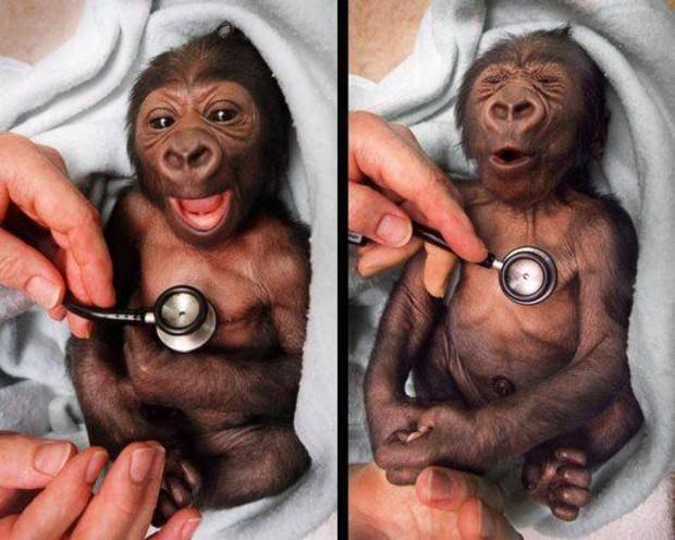 293257-monkeys-cute.jpg