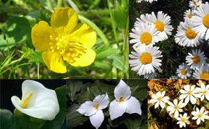 fibonacci_petals.jpg
