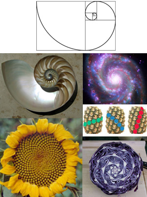 fibonacci_spiral_everywhere.jpg