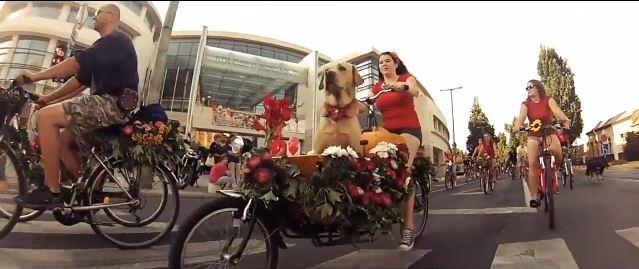 Kutyahordó bicajozás