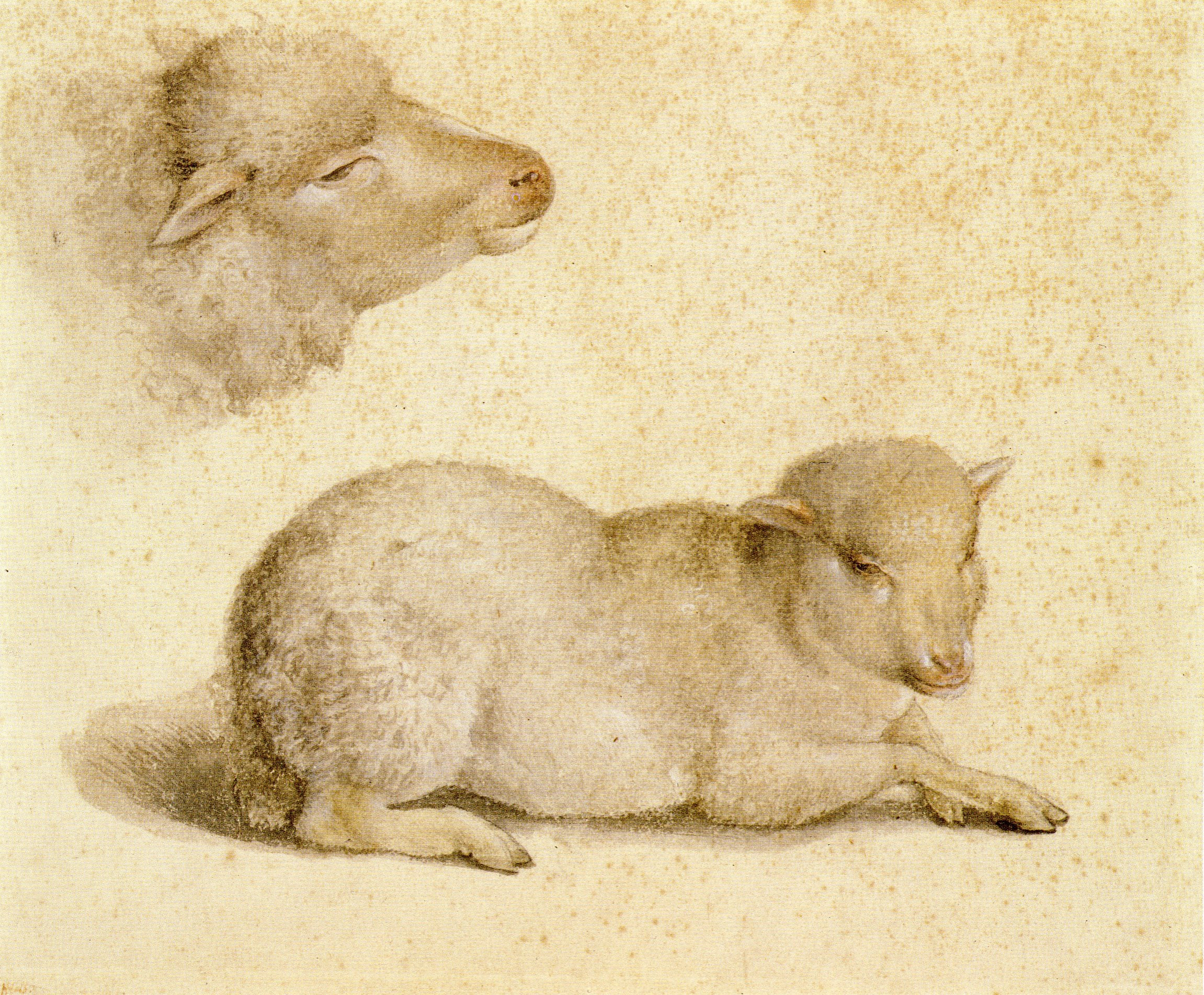 Bárányhús majorannával