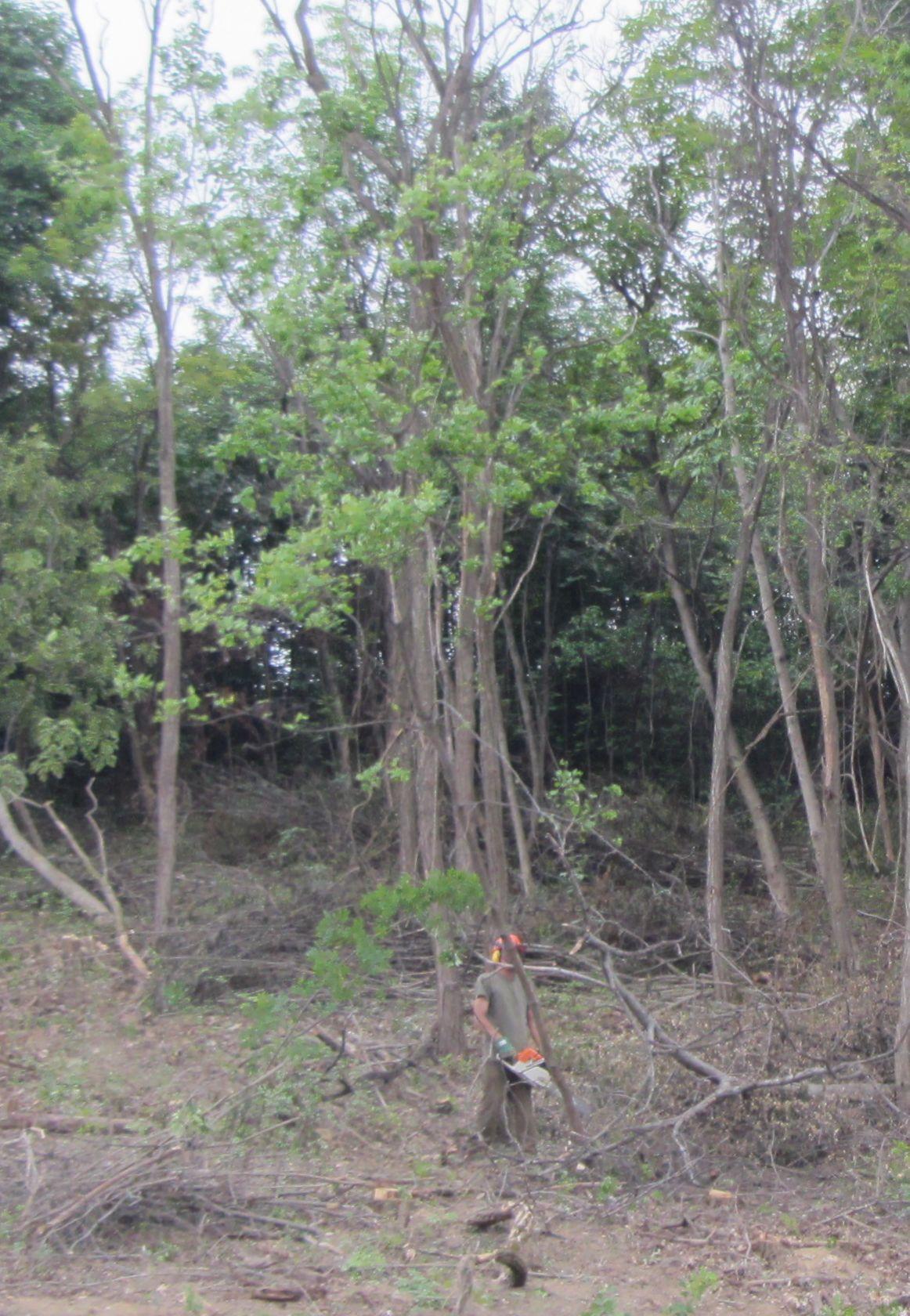 Ilyen az erdő maradéka