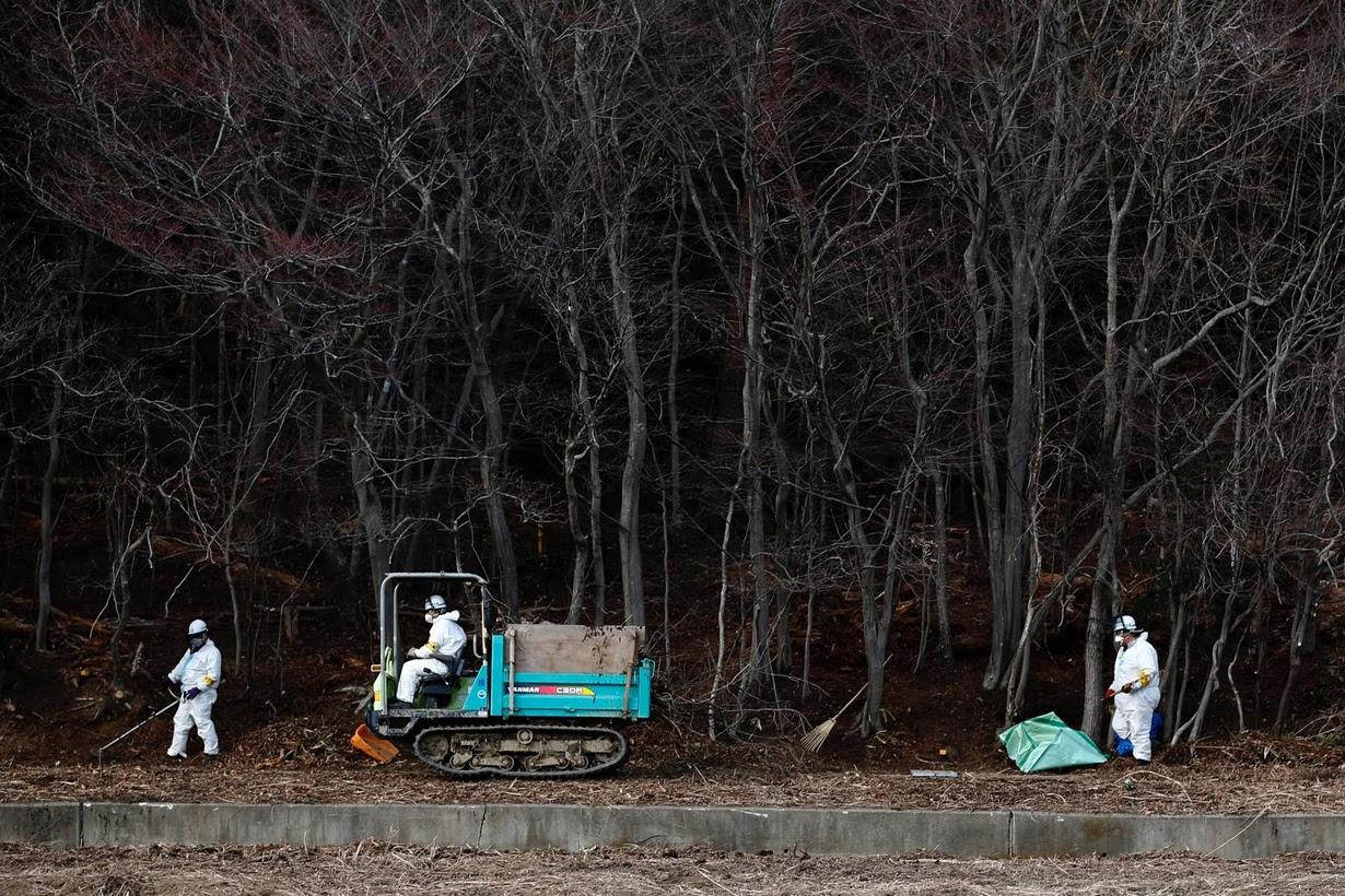 Japán takarító munkások gyűjtik be a radioaktív földet és lehullott leveleket a Fukusima közelében lévő Tomioka városa mellett fekvő erdőben. 4 év telt el, hogy a helyi atomerőművet tönkretette egy cunami, a régió azóta is küzd az újjáépítéssel. (f.: Reuters)