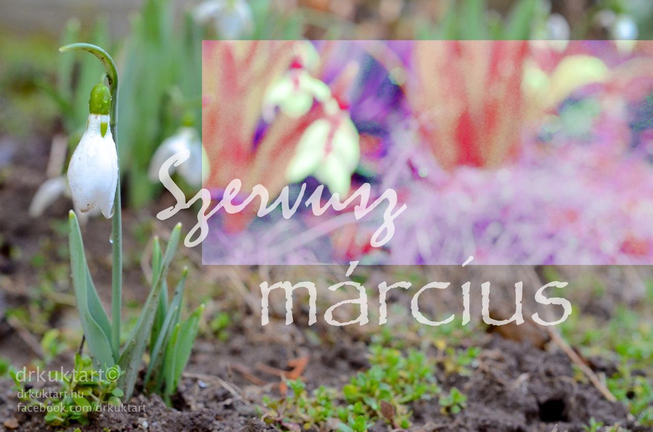 """Képtalálat a következőre: """"Március"""""""