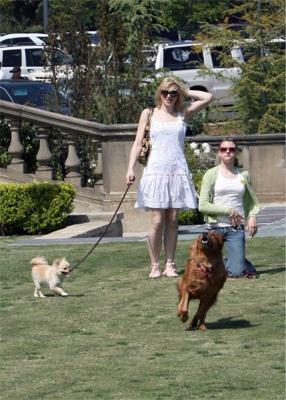 courtney_dogs.jpg